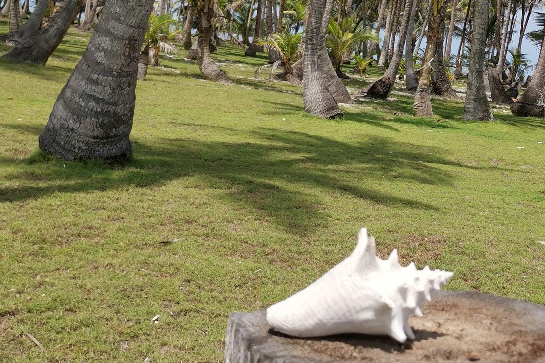 Caracol marino en la isla Morodub