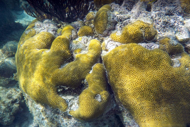 Arrecifes de Corales en Gaimadubgan