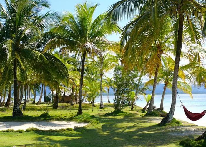 Palmas de cocotero en la Isla Narasgandub